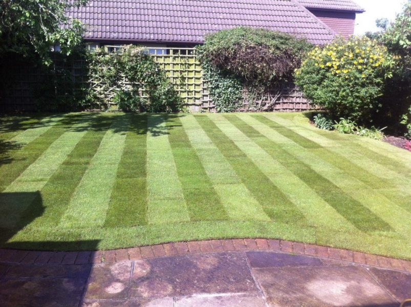 lawn replacement rayleigh
